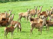 Descubriendo carne ciervo criadero posibilidades culinarias