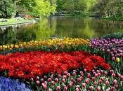 medicis, sacro Imperio romano tulipanes