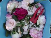 Deadheading: eliminación rosas marchitas poda limpieza