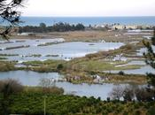 Marjal Almenara Convenio Ramsar