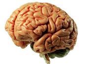 Como Guarda Cerebro Recuerdos