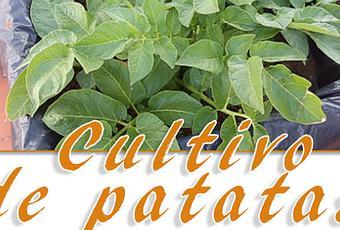 C mo cultivar patatas en maceto huerto paperblog for Como cultivar patatas