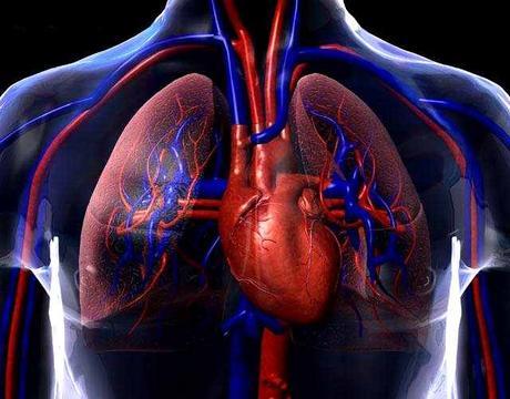 Sistema Circulatorio (II)