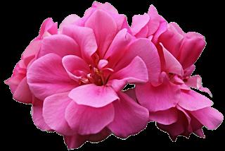 7 Plantas con increibles poderes para la piel Vol.1
