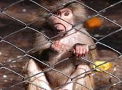zoológico como institución... visión crítica desde pedagógico, personal profesional...