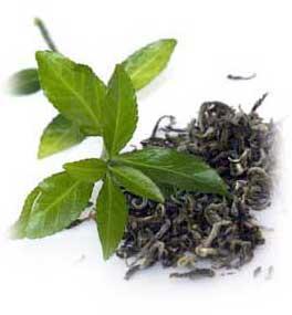 Te verde como planta medicinal