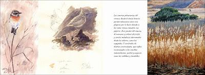 NUEVO LIBRO: Cuaderno de campo de Sierra Morena