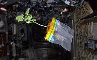 Preparando el viaje a Marte. Seedling Growth-3