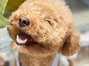beneficios tener perro familia
