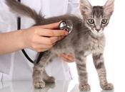 Virus Gatos. Enfermedades Infecciosas Atacan Mascota
