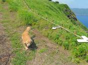 Este perro enamorado Internet trollear estas fotos Google Street View