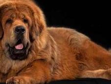 perro caro mundo