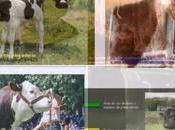 Videos educativos alumnos: Selección artificial para mejoramiento genético