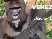 gorilismo venezolano!