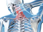 columna vertebral esencia nuestro cuerpo