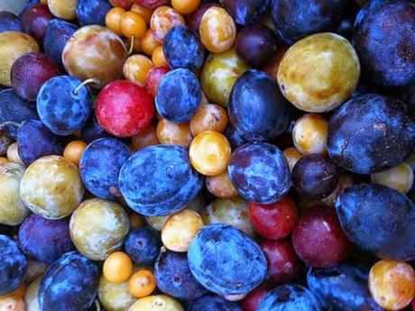 Los frutos salen de colores diferentes