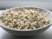 alimentos germinados: tipos beneficios para salud