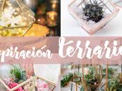 Inspiración: TERRARIOS tendencia para amantes plantas
