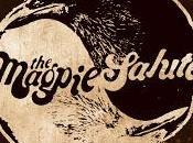 Magpie Salute falta Cuervos, buenas Urracas