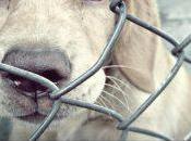 Campaña Perro Mochilero Prime Amazon