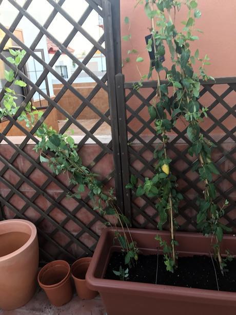 Preparar plantas para la terraza