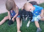 Animales niños: creciendo juntos