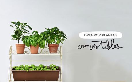 Julio sin plástico: Las plantas y el jardín