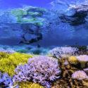 Chasing Coral ya está disponible en NETFLIX y no te lo puedes perder