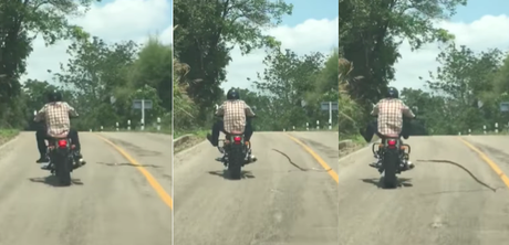 Serpiente ataca a un motociclista en plena carretera