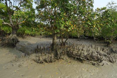 La silenciosa labor de los manglares