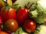 empezamos cosechar tomates!!