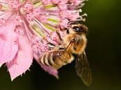 sólo miel abeja