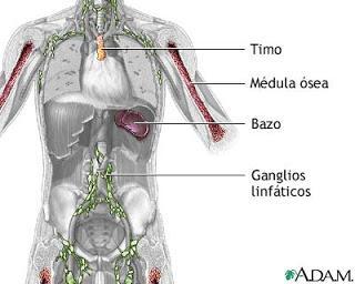 Sistema Inmune (2)