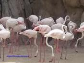 Pasea entre animales bioparc valencia