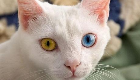 siempre revisa los ojos de tu gato
