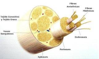 Todo sobre la anestesia epidural en la cesárea [2]