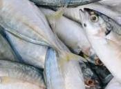 españoles tiran 23,1 millones kilos pescado fresco