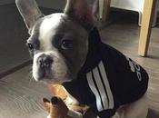 Imágenes ropa para perros bulldog frances