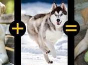 Cruzar Perros Éxito