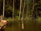 territorio bestia (Rogue, Greg McLean, 2007. AUSTRA EEUU