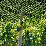 Todo sobre el vino: Conceptos 15ª Parte