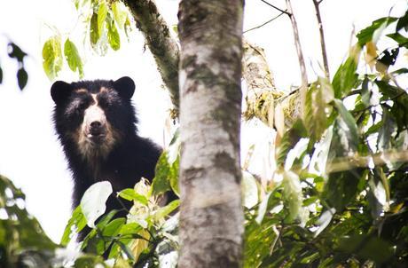 Maquipucuna, la reserva de los osos