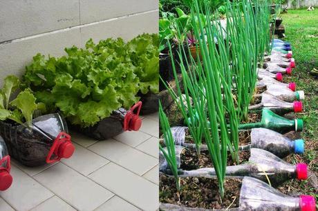 Descubre 12 Alimentos que podrás Cultivar en Botellas de Plástico