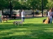 Parque perros Tambien reglas