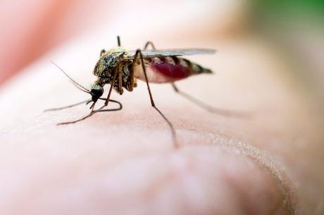 Remedios caseros para mordeduras del mosquito