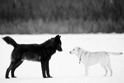 Lobo negro. Nick Jans.