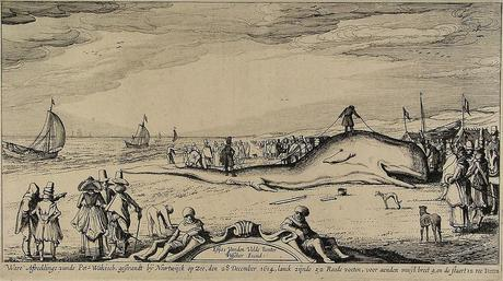 A 17th-century depiction of a beached sperm whale at Noordwijk in the Netherlands.