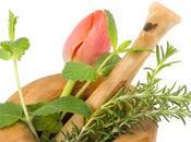 Cuidados plantas jardin: Remedios Caseros para Plantas