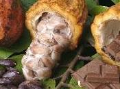 chocolate posible solución cálculos renales ácido úrico