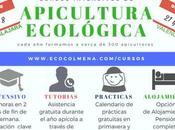 España: cursos intensivos apicultura ecológica guadalajara valencia.